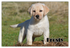 01Frosty9wks2.png