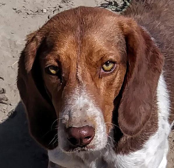 East Idaho Beagles.jpg