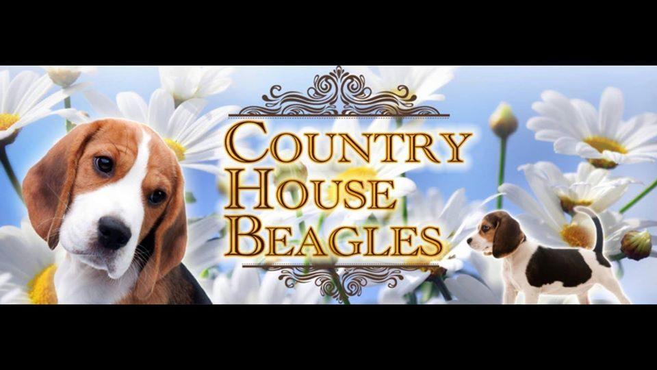 Country House Beagles.jpg