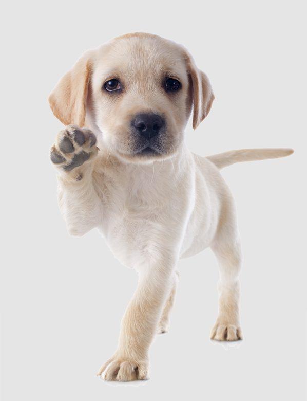 rocksprings_home_puppy.jpg