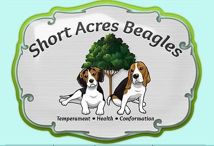 Short Acres Beagles.JPG