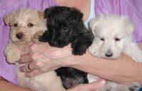 millie-pups-6-29-09.jpg