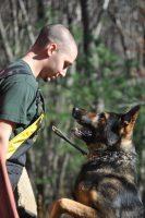 german-shepherd-training (1).jpg
