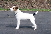 bellagio_for_website_june_2011_reserve_open_terrier.jpg