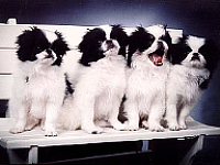 4-pup-bench-about-us.jpg