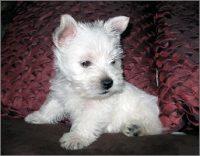 puppies5c.jpg