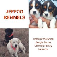 Jeffco Kennels.jpg
